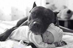 Debunking the Myth of Aggressive Breedshttp://www.kurgoblog.com/debunking-myths-aggressive-breeds/