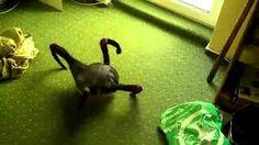Resultado de imagem para aranhas estranhas