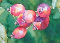 How to Paint Rose Hips in Watercolour with Julie King