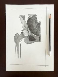 original radiology wall art hip x-ray anatomy by penciledbynicole