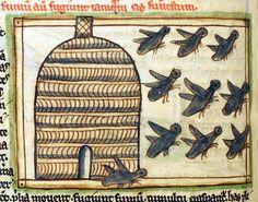 bees  Bestiary/Liber de natura bestiarum, England after 1236 (British Library, Harley 3244, fol. 57v)