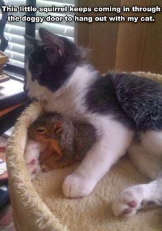 http://3.bp.blogspot.com/-IFN7HT-6_y4/UuT3Lwmz2tI/AAAAAAAAigM/8iT-qGEsxv4/s1600/squirrel+iftm.jpg