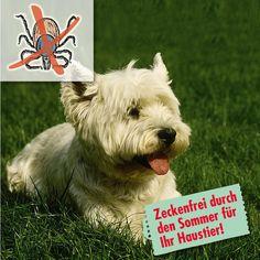 Sprej pro zvířata odpuzující klíšťata | Magnet 3Pagen #magnet3pagencz #3pagen #animals