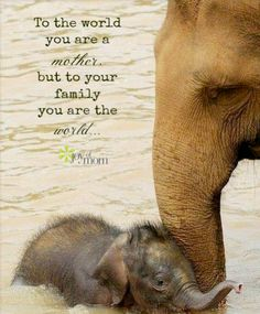 The Daily Cute: Elephant-itis.the Good Kind! - Frank Giroup - The Daily Cute: Elephant-itis.the Good Kind! Mum and baby elephant having a bath - Cute Creatures, Beautiful Creatures, Animals Beautiful, Cute Baby Animals, Animals And Pets, Funny Animals, Wild Animals, Animal Babies, Animal Pictures