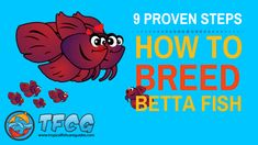 Betta Fish Breeding can be difficult if you don't know what your doing. Use these 9 PROVEN STEPS and learn How To Breed Betta Fish The Easy Way. You'll also find 10 AWESOME Betta Fish Mating Tips & Tricks to ensure your success. The most important thing you need to know about Betta Breeding is that the male will...