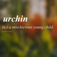 Urchin-