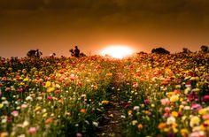 Sunset by Igor Sukmansky on 500px