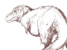 Meggy Vodusek : T. rex sketch. I started appreciating theropods more now that floof is becoming the norm.