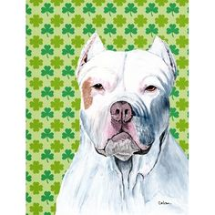 Caroline's Treasures Pit Bull St. Patrick's Day Shamrock Portrait 2-Sided Garden Flag
