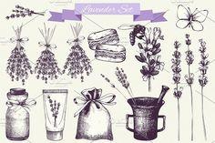 Hand Drawn Lavender Illustration by Yevheniia on @creativemarket