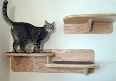 The Vertical Cats Double Cat Shelf - Contemporary Cat Furniture, Trees, Shelves and Stairs | Our Wall Mounted Cat Climbing System