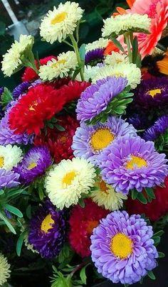 Beautiful Flowers Wallpapers, Beautiful Rose Flowers, Flowers Nature, Exotic Flowers, Amazing Flowers, Pretty Flowers, Colorful Flowers, Beautiful Gardens, Wild Flowers