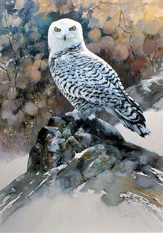 """Sunlit Splendor"" Snowy Owl by Morten E Solberg Watercolor Bird, Watercolor Animals, Watercolor Paintings, Owl Paintings, Watercolors, Wildlife Paintings, Wildlife Art, Owl Art, Bird Art"