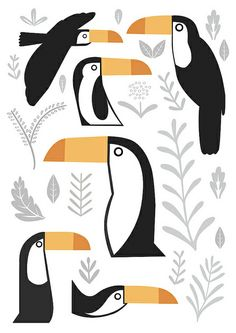 toucans