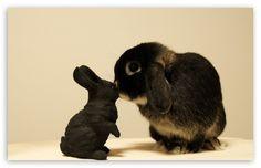 Black Bunny wallpaper