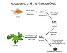 Want to learn the science behind our aquaponic growing process? It's so simple it took us just a few minutes to map it out for you!