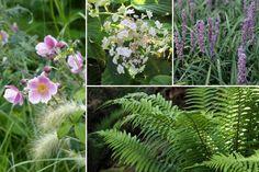10 plantes vivaces d'ombre pour composer un massif - Promesse de Fleurs Anemone Du Japon, Geranium Vivace, Natural Garden, Garden Styles, Horticulture, Flower Power, Nature, Flowers, Plants