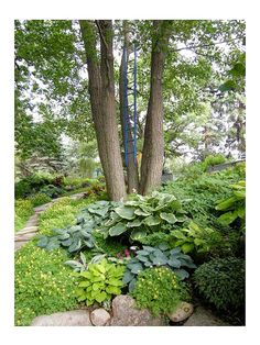 Garden Tip: Contrast hostas with other fine-leaf plants such as fernleaf bleeding heart, astilbe, or Japanese painted fern.