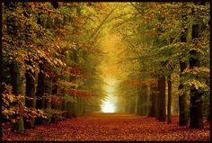 Park de OUde Warande in Tilburg - 14 van de mooiste herfstlocaties om te fotograferen | Inspiratie | Zoom.nl