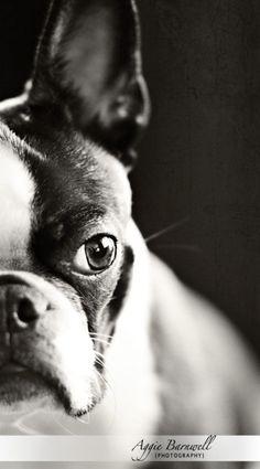 Photo Contest Winners | Pet Faces | I Heart Faces