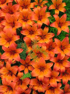 Google Image Result for http://fc01.deviantart.net/fs71/i/2010/181/a/2/Full_of_Tiger_Lillies_by_VampireMage.jpg