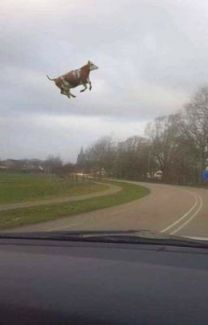Read 18 from the story Memes 2 by BryanMafla (Bryan) with reads. Cute Cows, Cute Funny Animals, Funny Animal Pictures, Funny Photos, Meme Chat, Image Hilarante, Haha Funny, Funny Memes, Fluffy Cows