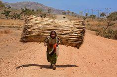 Fotografia Incredible. Ethiopia. de Carlos Cass - Esta mulher anda dezenas de quilômetros todos os dias debaixo de um sol de esmagamento, suportando cargas pesadas, como você pode ver. No fundo uma outra mulher carregado com grama e no caminho centenas de pessoas carregadas com tudo que você pode imaginar, água, lenha, alimentos, bens e das crianças.