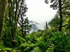 I think never in my life have I seen such #stunning and #beautiful #nature than I have in #NewZealand. It is just #breathtaking!Ich glaube ich habe niemals in meinem Leben so eine #atemberaubende wunderschöne #Natur wie in #Neuseeland gesehen!