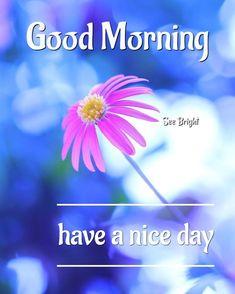 Good Morning... Morning Msg, Good Morning Good Night, Good Day, Good Morning Greetings, Good Morning Wishes, Good Morning Quotes, Good Morning Beautiful Pictures, Good Morning Images, Wise Quotes