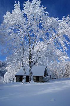 The beauty of winter. Bright blue winter sky reflecting off of bright white snow Winter Szenen, I Love Winter, Winter Magic, Winter Christmas, Winter White, Winter Trees, Snowy Trees, I Love Snow, Snow Scenes