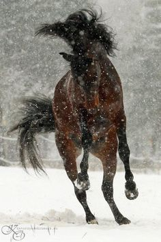 Beauty dancing in the snow...