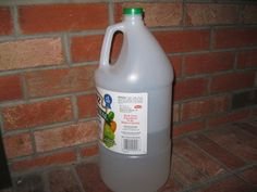 How to Remove Urine from Carpet with White Vinegar - Yahoo! Voices - voices.yahoo.com