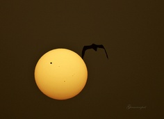 sunrise and transit of venus! (Explored #5) by starrypix, via Flickr