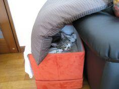 箱の中に入る猫 福松