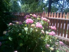Traditional Gothic picket fence adds a classic statement to your yard. Contact us today! Wood Fences, Fencing Companies, Custom Wood, Gothic, Yard, Traditional, Classic, Plants, Beautiful