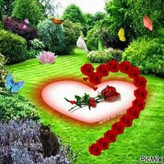 My sweetheart Rahena mem Jast for you. Beautiful Love Pictures, Beautiful Gif, Beautiful Roses, Romantic Pictures, Love Heart Images, Love You Images, Gif Bonito, Coeur Gif, Valentines Gif