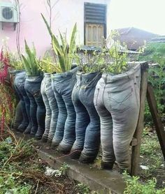 Jeans to planters
