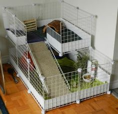 Krisztina's cageAnother lovely cage, again with a nice wide ramp, this one with carpeting on to help piggie feet get grip. The upper level alone is bigger than most pet store guinea pig cages! Diy Guinea Pig Cage, Guinea Pig Hutch, Pet Guinea Pigs, Guinea Pig Care, Pet Pigs, Hedgehog Cage, Hedgehog Pet, Hedgehog House, Bunny Cages