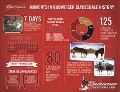 Budweiser Clydesdale Data: equisearch.com