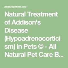 Natural Treatment of Addison's Disease (Hypoadrenocorticism) in Pets © - All Natural Pet Care Blog | All Natural Pet Care Blog