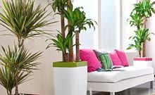 Plantes vertes intérieur : entretien plantes - Jardinerie Truffaut