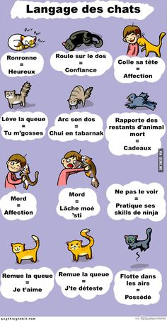 Trendy Funny Love Mems For Him Language 62 Ideas I Love Cats, Cute Cats, Funny Cats, Animals And Pets, Funny Animals, Cute Animals, Crazy Cat Lady, Crazy Cats, Cat Behavior