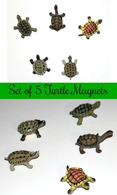 Set of 5 magnets of five different and adorable turtles #ad #Etsy #turtles