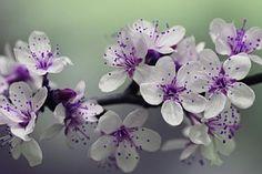 Flor, Pétalos, Primavera, Naturaleza