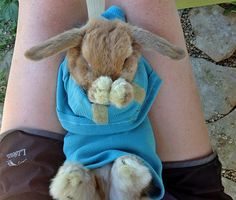 Bunny care advice for first-time Holland Lop pet bunny owners.  Discover what to feed your Holland Lop bunny, types of rabbit cages, and all the supplies you'll need to keep your bunny safe and happy!