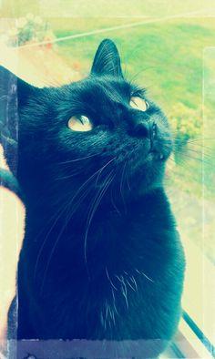 Dreamin World Domination, Cats, Animals, Gatos, Animales, Animaux, Animal, Animais, Kitty