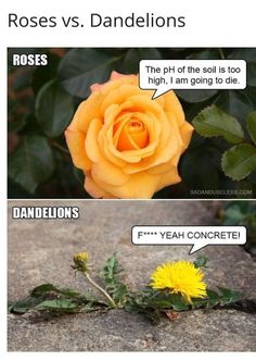 Sick and Tired Of The Panic? Here Are Some Hilarious Corona Virus Memes To Try And Brighten Your Day! Biology Memes, All The Things Meme, Funny Things, Funny Stuff, Pretty Meme, Me Too Meme, All Flowers, Life Memes, Brighten Your Day