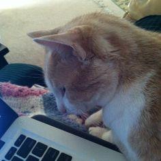 My orange tabby rescue kitty..