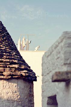 A cat on the roof Alberobello, Apulia.
