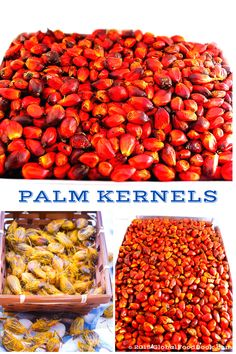 SOME IMPORTANT FACTS ABOUT PALM KERNELS. Palm kernel is among the tropical…